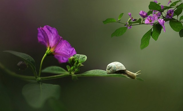 Snail on flower leaf