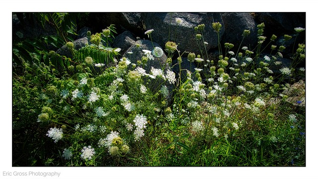 Explosion of Wild Flowers
