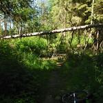 Fallen tree again.