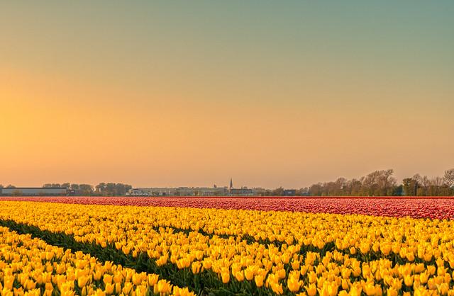 Colours of Warmenhuizen.