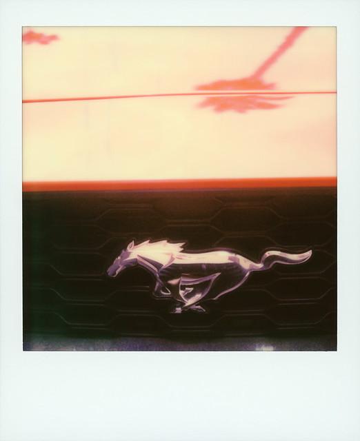 Mustang Palm