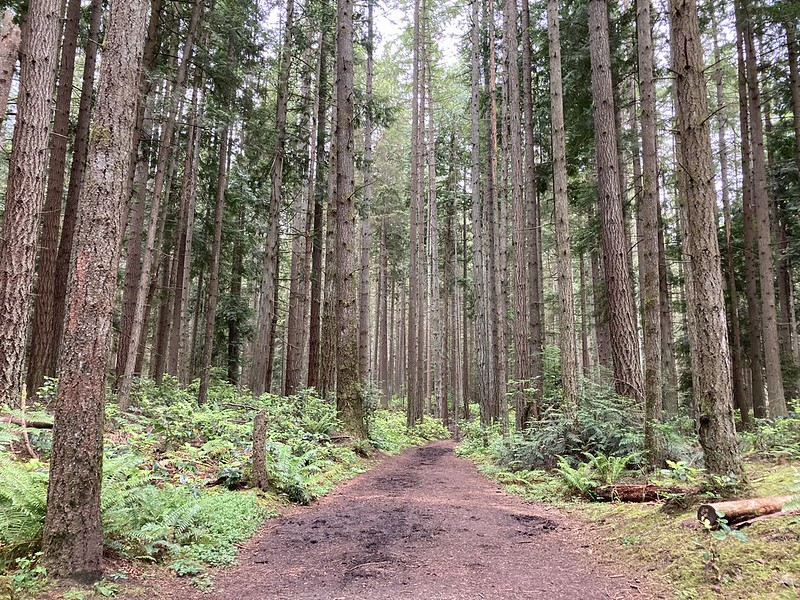 Bridle Trails forest regrowth