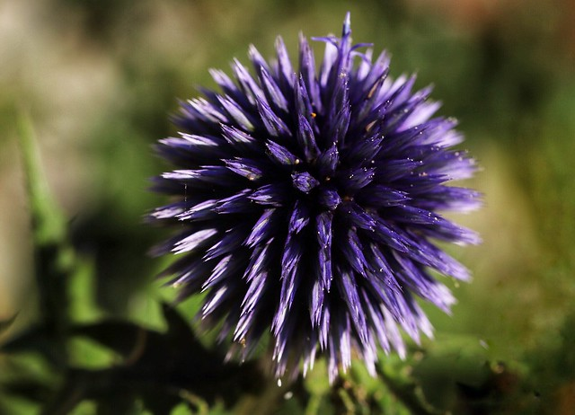 Purple ball....