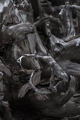 Roots VII (Explored)  (由  steve rubin-writer