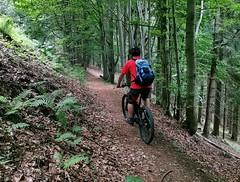 Lesní trail k Maxovo vodní nádrži
