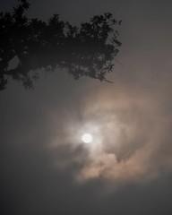 Aux environs de sept heures, c'est alors que le soleil tentait de percer ce que la lune lui avait laissé d'atmosphère... 04.08.20 #instagood #picoftheday #photooftheday #color #fog #foggy #foggymorning #all_shots #exposure #composition #focus #capture #ph