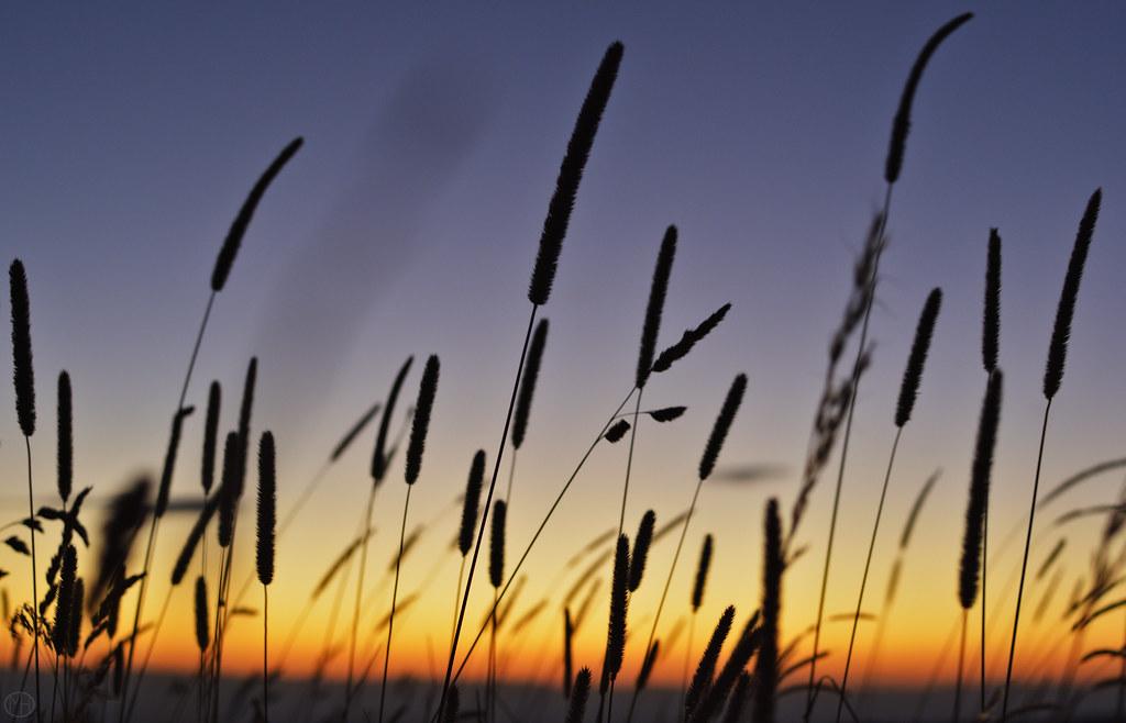 grasses along the way