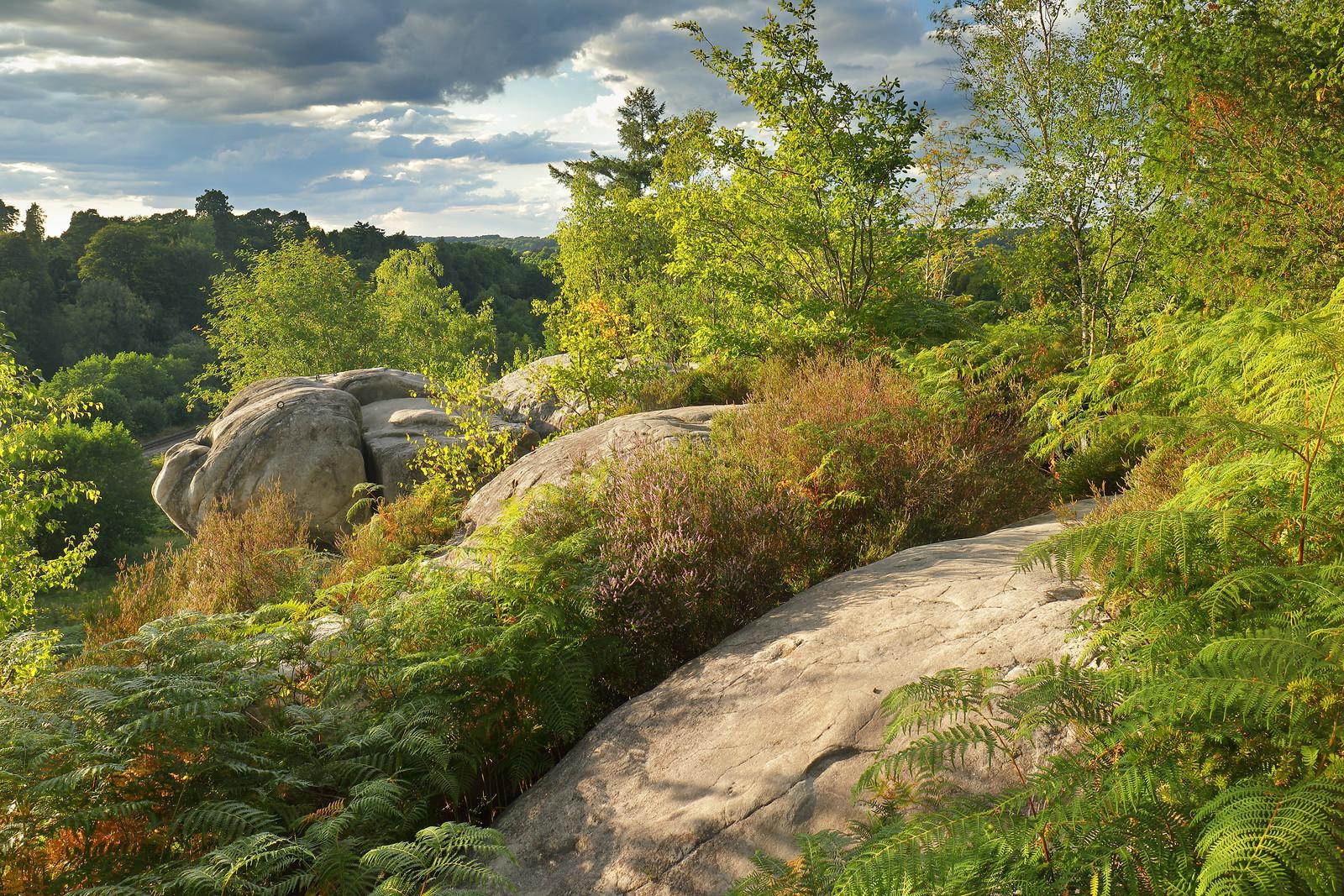 High Weald Rocks in August
