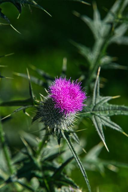 Stachelig Schönheit! Spiky beauty!