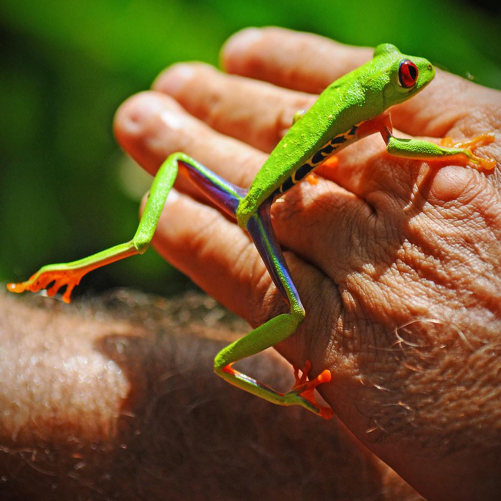 Visite du projet familial appelé Frog's heaven