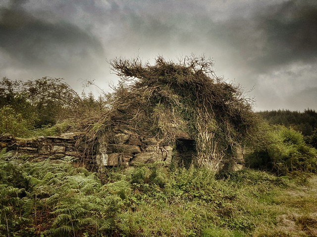 Hairy house - Llanfrothen - Wales
