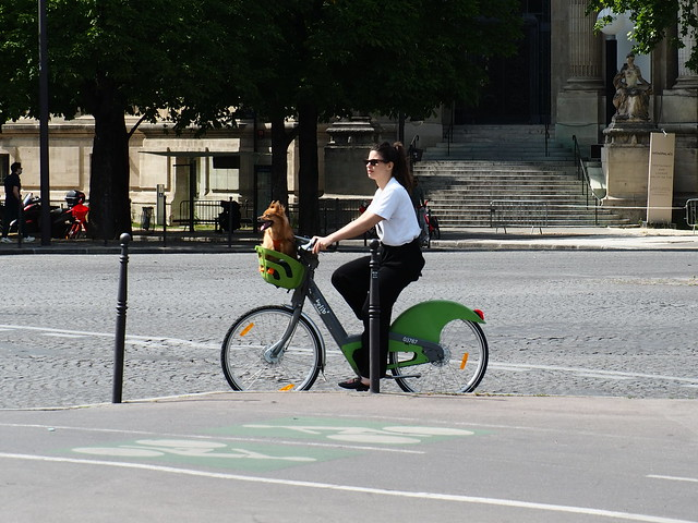 Happy dog in Paris