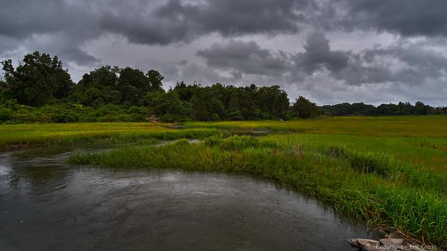 Wetlands Near Vinyard Point