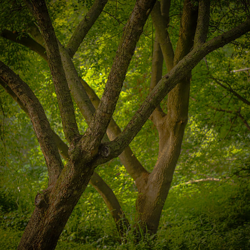 tree trees woods nature landscape wisconsin summer green couple branches arms leaves trunk woodland