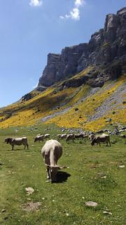 Parque Natural de Ordesa y Monte Perdido (Pirineos)