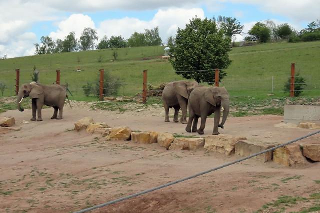 20337. Erfurter Elefantendamen