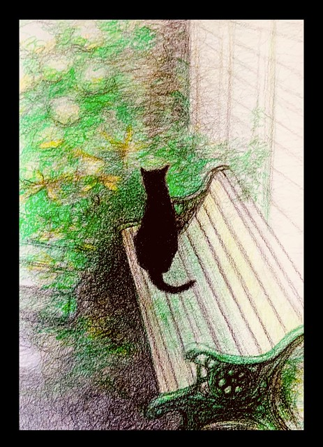 Jenkins listening to sounds in the garden, today. Coloured Polychromos pencil drawing by jmsw. Just for Fun. On card.