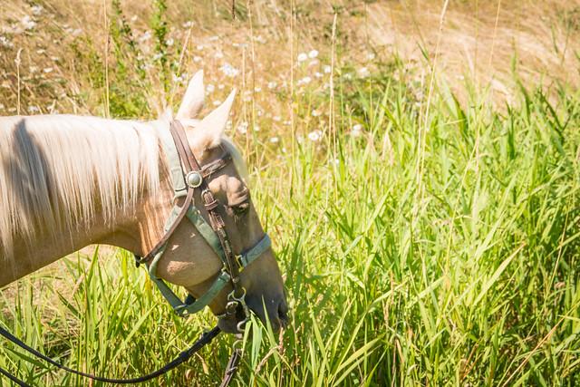Horseback Riding in Campbell Valley Park