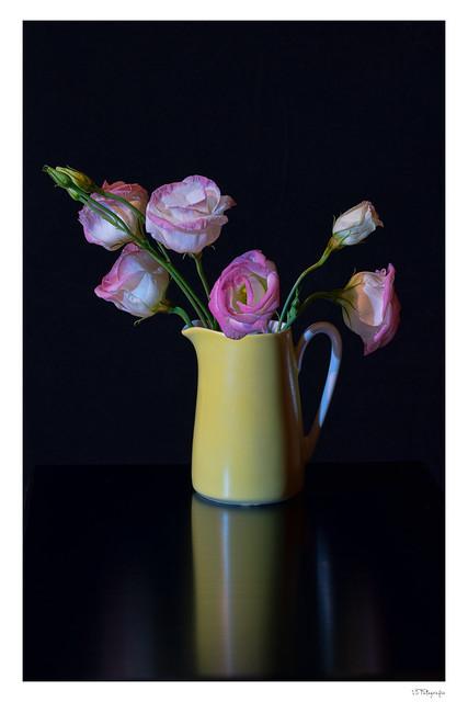 Japanische Rose in altem Kahlaporzellan