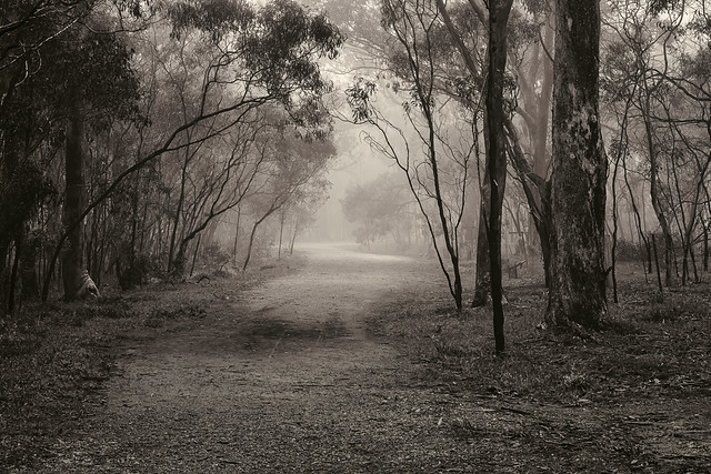 FOTF Monochrome Woodlands Foggy Morning Edge50 2020-07-16 (5D4_5832)