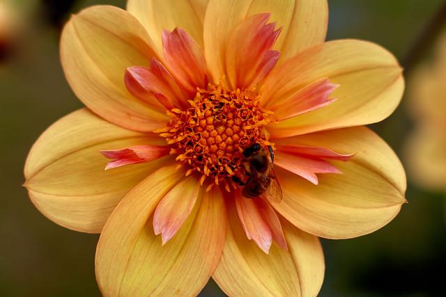 Blume mit Besucher