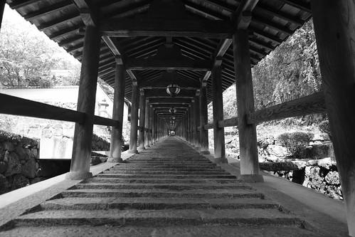 05-08-2020 Hasedera Area, Nara pref (15)
