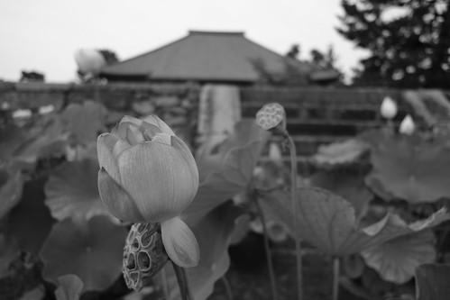 05-08-2020 Nara, Saidaiji Temple (7)