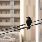 Cuervo desde la ventana
