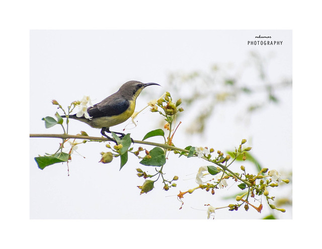 Sun Bird`