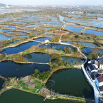 CHINA- Huzhou Mulberry-dyke and Fish Pond System