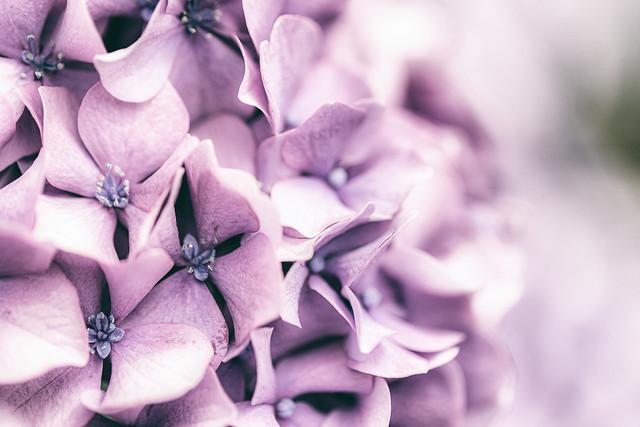 59/100: To plant a garden is to believe in tomorrow...Audrey Hepburn
