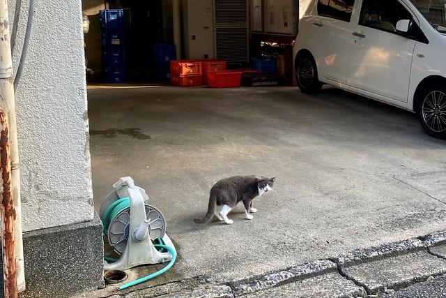 Today's Cat@2020ー08ー05