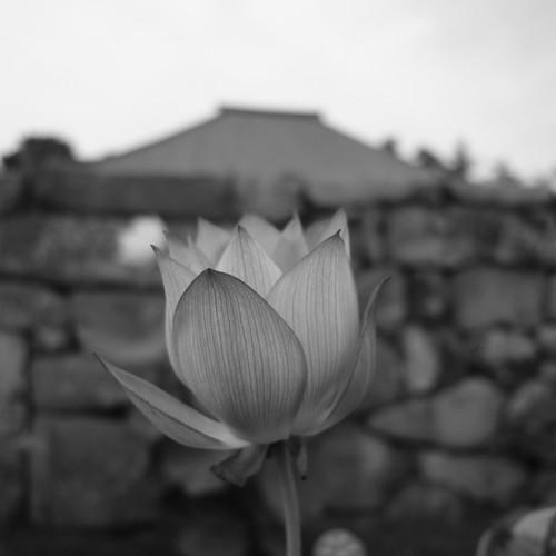 05-08-2020 Nara, Saidaiji Temple (8)