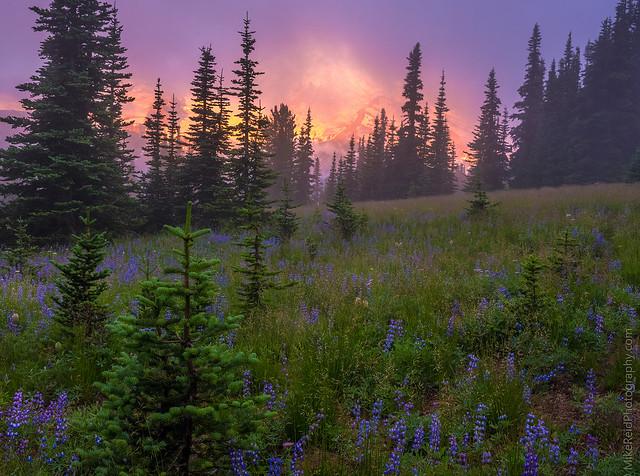Rainier Misty Sunrise