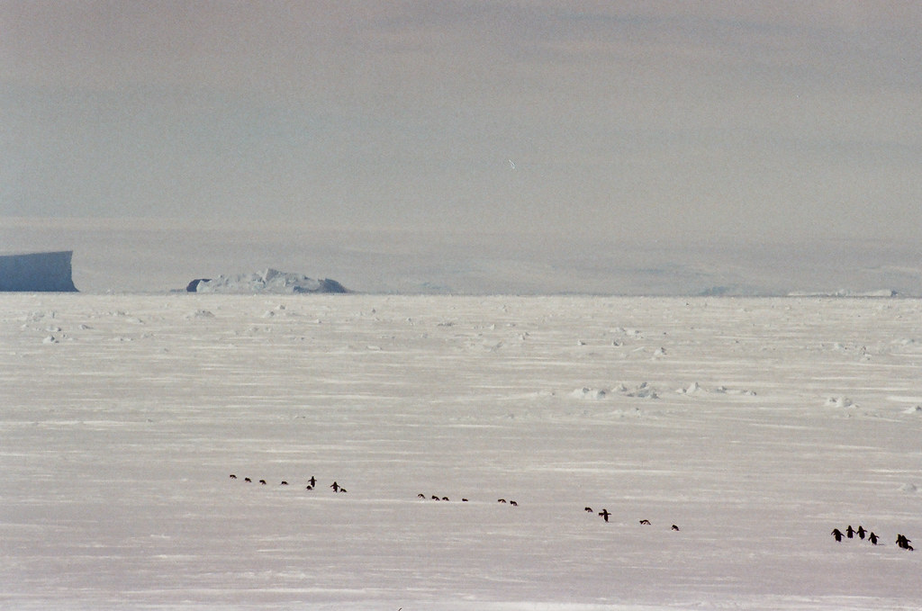 Cosmonauts Sea, Antarctic