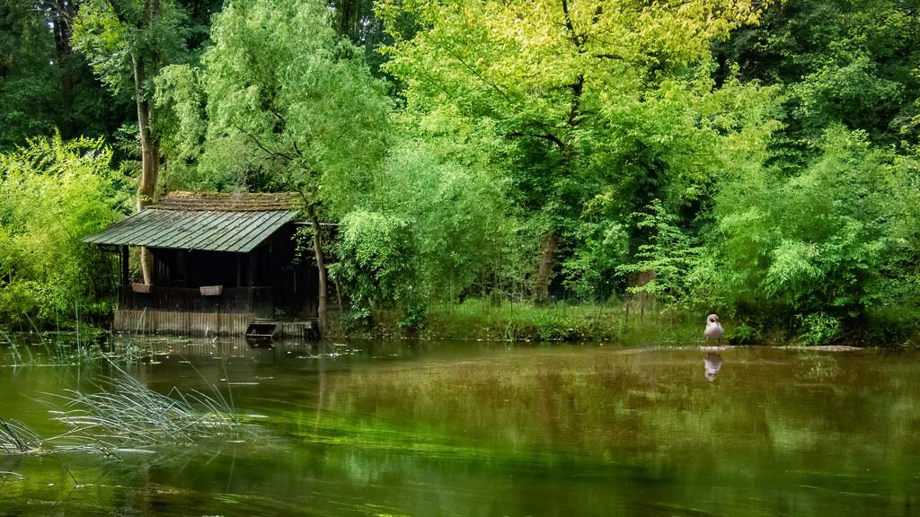 La cabane du pêcheur... 50192350316_f8922272bc_b
