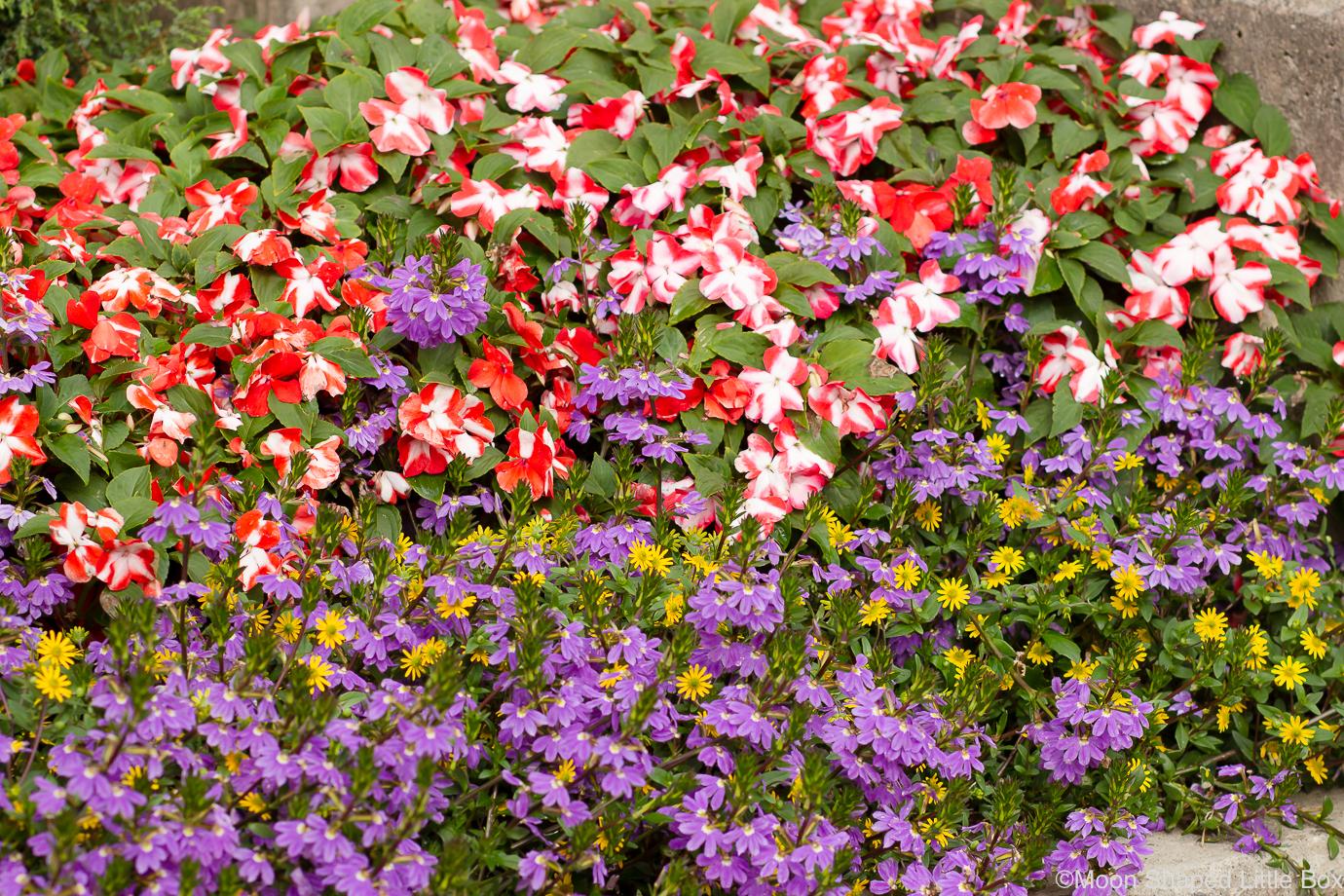 Kukkia-Taidemuseolla