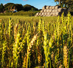 Ripening of the Crops & Hay Bales