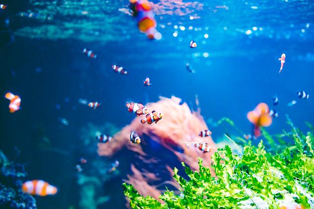 Nemo. (explore)
