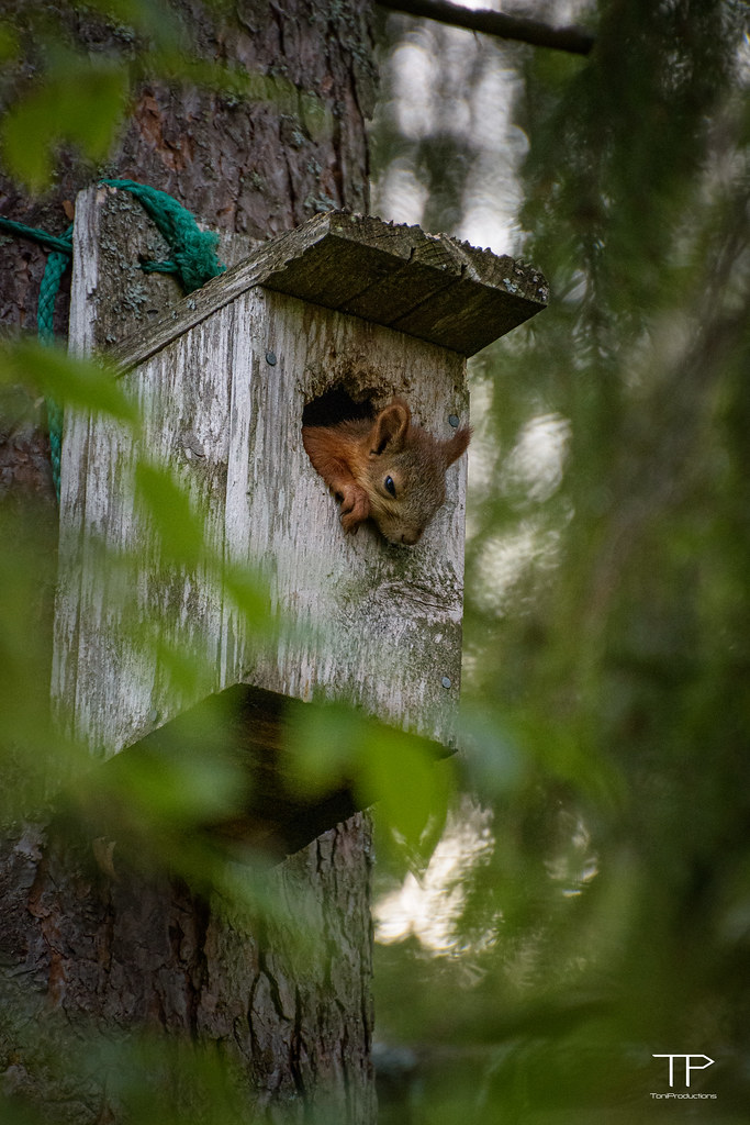 A tired squirrel in a birdhouse