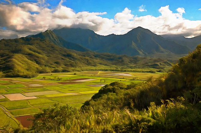 Agriculture in the Hanalei Valley