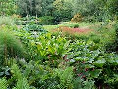 RHS Rosemoor garden in Devon