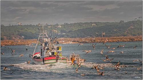 000 Ambiente marino_Marine environment