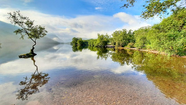 Lone tree of padarn lake