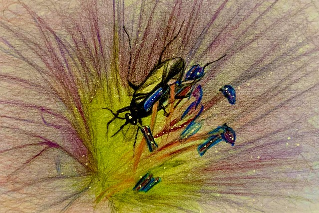 inside a Geranium flower today. Polychromos coloured pencil drawing by jmsw on card.