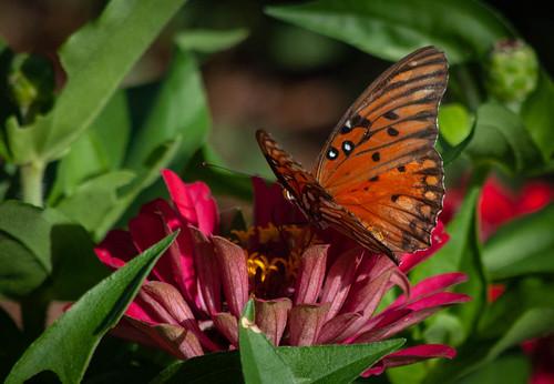Butterfly Wings on Flower