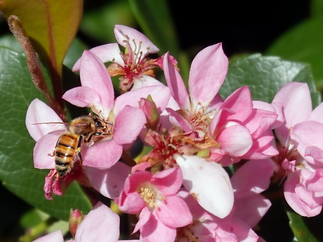 If a queen bee were crossed with a Friesian bull, would not the land flow with milk and honey?  (Oliver St. John)