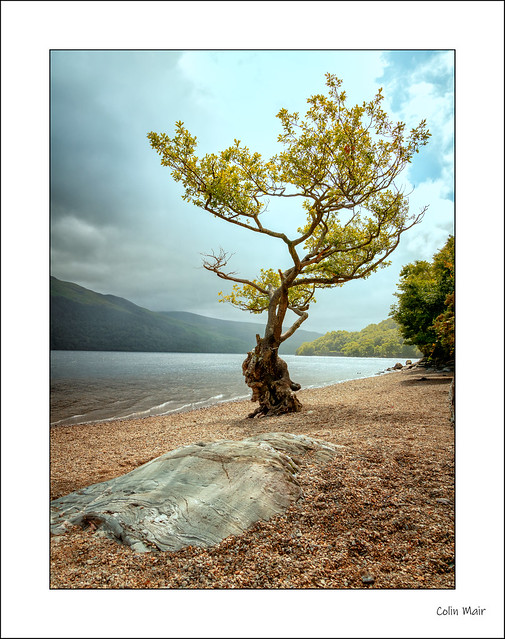 Another Lone Tree - 2020-07-25th
