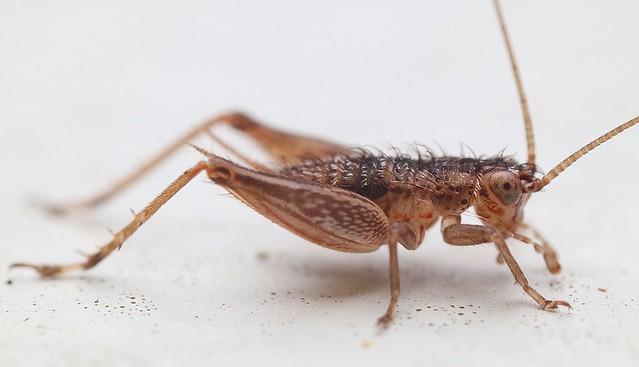 Little Grasshopper