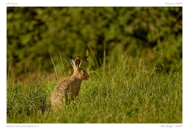 Le liévre   the rabbit